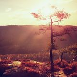 Взгляд через ветви к глубокой туманной долине внутри рассвет Туманное и туманное утро на точке зрения песчаника в равенстве леса  Стоковая Фотография RF
