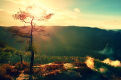 Взгляд через ветви к глубокой туманной долине внутри рассвет Туманное и туманное утро на точке зрения песчаника в равенстве леса  Стоковая Фотография