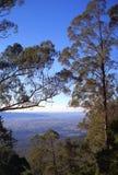 Взгляд через деревья стоковая фотография