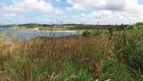 Взгляд через длинную траву в прибрежном поле смотря через красивый лиман и прибрежный выгон за пределами сток-видео