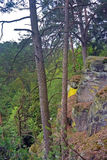 Взгляд через спутывание ветвей в лесе Стоковые Фотографии RF