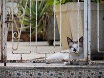 Взгляды вокруг Scharloo - кота стоковые изображения rf