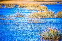 Взгляды водного пути и болота на острове Южной Каролине johns стоковая фотография rf