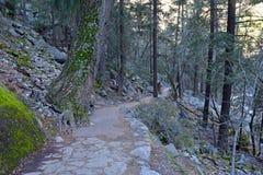 Взгляды вдоль тумана отстают до весеннего падения, Yosemite Стоковые Фото