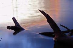 взгляды головки камеры верблюдов Стоковая Фотография
