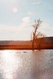 Взгляды побережья от дерева, поляк-гусыни Стоковое Изображение RF