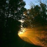 Взгляды солнечного света утра Стоковые Изображения