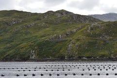 Взгляды фьорда стоковое изображение rf