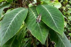 Взгляд экзотической бабочки на лист Стоковое Изображение