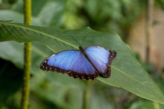 Взгляд экзотической бабочки на лист Стоковые Фото