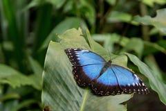 Взгляд экзотической бабочки на лист Стоковые Изображения