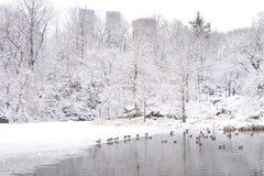 Взгляд Central Park после шторма снега Стоковая Фотография RF