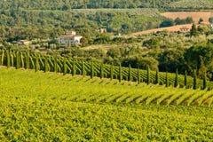 Взгляд classico Chianti стоковые изображения rf