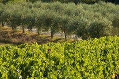 Взгляд classico Chianti стоковое фото rf