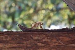 Взгляд exuvia Cicata Стоковое Изображение RF