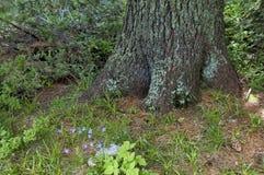 Взгляд glade, травы и части хобота живущий организм в средней части на горе Rila к Maliovitza выступает стоковое изображение rf