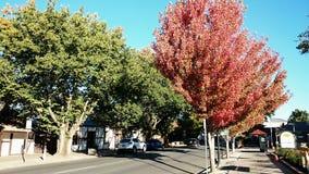 Взгляд @ Hahndorf Австралия городка Стоковая Фотография RF