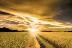 Взгляд Landspace над плантацией рисовых полей Стоковое Изображение RF