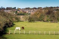 Взгляд Lanscape сельской местности в Великобритании Стоковое Изображение RF