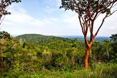 Взгляд Las Terrazas, Кубы стоковое фото