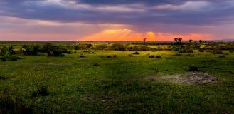 Взгляд Masai Mara (Kenia) Стоковые Фото