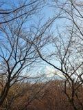 Взгляд Mount Fuji с ветвями дерев-Hino-Токио-Японии Стоковые Изображения RF