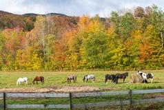 Взгляд Paddock лошади в красивом ландшафте падения Концепция Foilage Стоковое фото RF