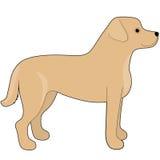взгляд retriever задего щенка labrador собаки предпосылки серый Стоковое Изображение