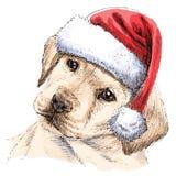взгляд retriever задего щенка labrador собаки предпосылки серый Стоковые Фотографии RF