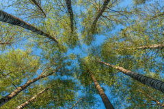 Взгляд Treetop от дна стоковые изображения