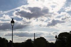Взгляд treetops в парке Парижа и Эйфелева башни в t стоковые фотографии rf