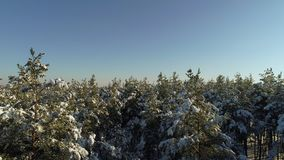 Взлет в лесе зимы видеоматериал