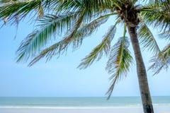 Взморье кокосовой пальмы Стоковая Фотография