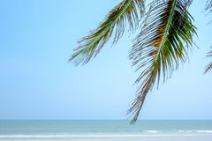 Взморье кокосовой пальмы Стоковое Фото