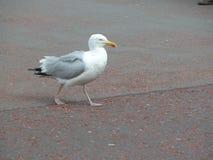 Взморье, море gal стоковая фотография rf