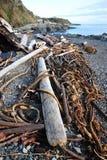взморье пляжа Стоковая Фотография RF