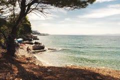 Взморье сосны Ривьеры Makarska стоковая фотография