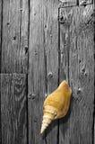 взойдите на борт древесины раковины bw стоковое фото rf