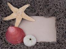 взойдите на борт мальчишкаа starfish раковины моря сообщения clam Стоковые Изображения