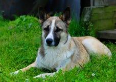 взрослая собака стоковое фото