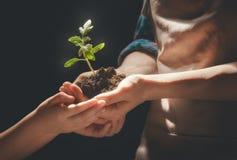 Взрослый и ребенок держа зеленый росток стоковая фотография