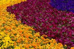 Взрыв весны Стоковая Фотография