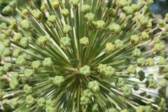 Взрыв зеленого растения Стоковая Фотография RF
