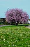 Взрыв цветения Стоковое Изображение RF