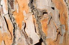 Расшива дерева сосенки Стоковые Изображения