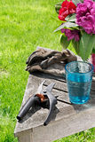взятие пролома садовничая Стоковая Фотография