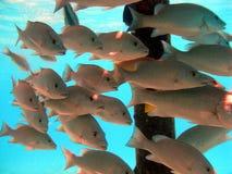взятие укрытия рыб Стоковое Фото