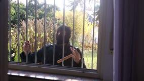 Взломщик при маска пробуя получить в окно акции видеоматериалы