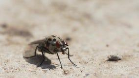 Видео насекомого мухы видеоматериал