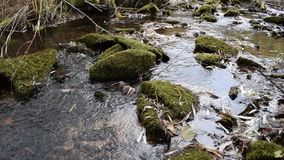 Видео потока леса расслабляющее видеоматериал
